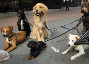 Obedience Training - How to get along with other dogs.