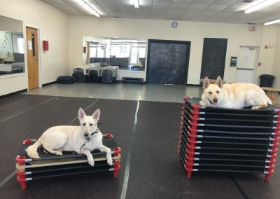 Trick training in our dog obedience class with dogs, Lily and Chevy.