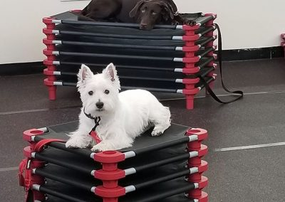 Lucy & Bentley In Dog Training Class
