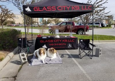 Dog training demonstration with two Collie dogs.