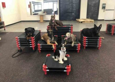 Dog boarding at Glass City K9 LLC at our Toledo OH location.