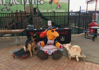 Glass City K9 LLC demonstrating dog training at a Toledo Mud Hens game.