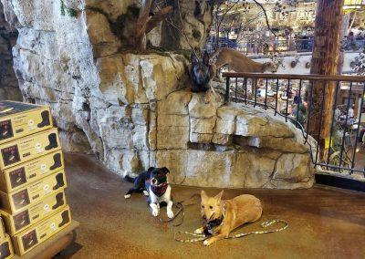 Dog training with student dogs, Zuri & Mack on location at Bass Pro Shop, Perrysburg Ohio.